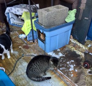 Orange in the shed with Trouble and Domino