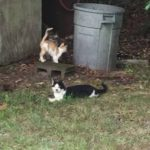 "Why I Haven't ""Rescued"" All of my Feral Cats"