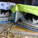 I Am a Feral Cat Caregiver