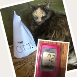Home Testing Your Diabetic Cat – Why It's SO Important
