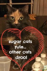 "Picture of Penny with caption ""sugar cats rule...other cats drool"""
