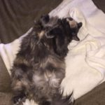 My Baby – My Soul Mate – Was Diagnosed With Feline Kidney Disease