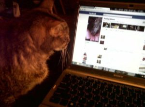 Tabby checking her Facebook on my laptop