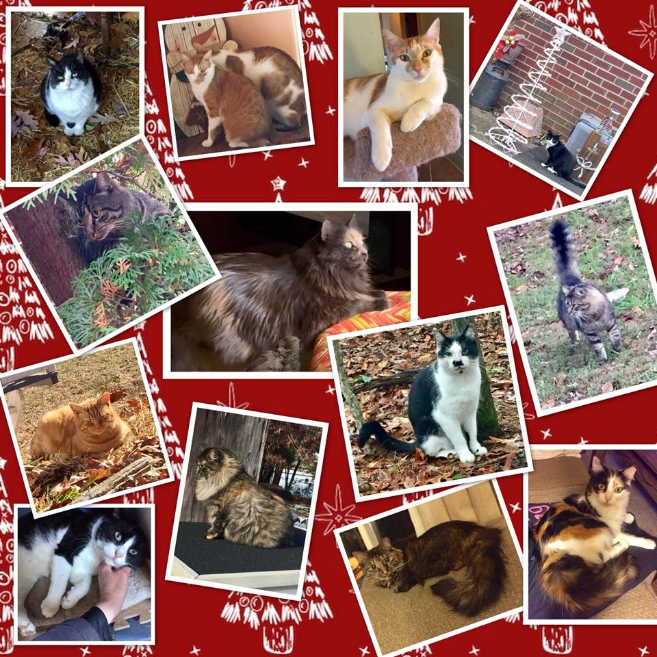 Picture of all of our cats-all spayed and neutered.