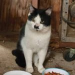 Meet Charlie (The Cat Formerly Known as Hitler) – Fluffy and The Kits' Rescuer!