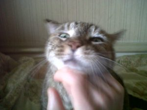 Tabby getting chin rubs.