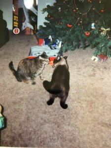 Taz and Tabby Christmas 1999