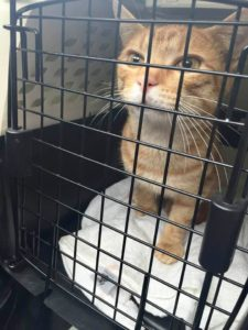 Chatty on his way home from surgery September 2015