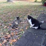 """""""Help! I Found Kittens in my Backyard!"""" – How You Can Help"""