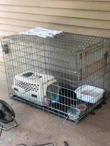 Feral cat recovery cage #2