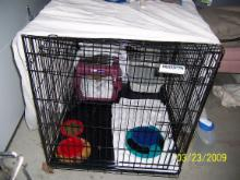 Feral Cat recovery cage