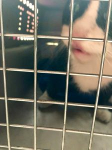 Blacky, safe and sound and heading home for a while to rest up and recover after his ordeal.