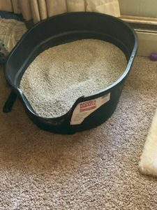 How Our Litter Boxes are Set Up