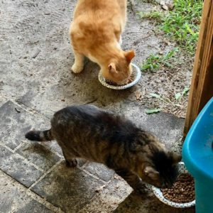 Tiggy & Teddy eating Young Again Zero