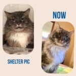 A Letter to My Senior Shelter Kitty's Former Owner