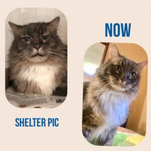 Winston's Shelter Pic vs New Home Pic