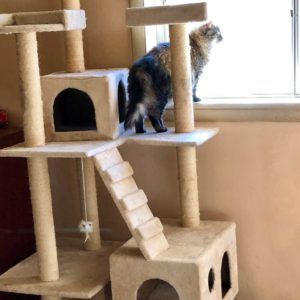 Fluffy using the Go Pet Club cat tree