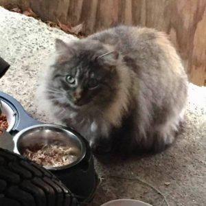 Fluffy eating out of her heated food bowl in Winter