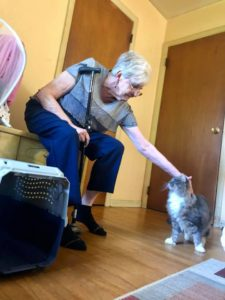 Winston meets Grandmommy Kitten